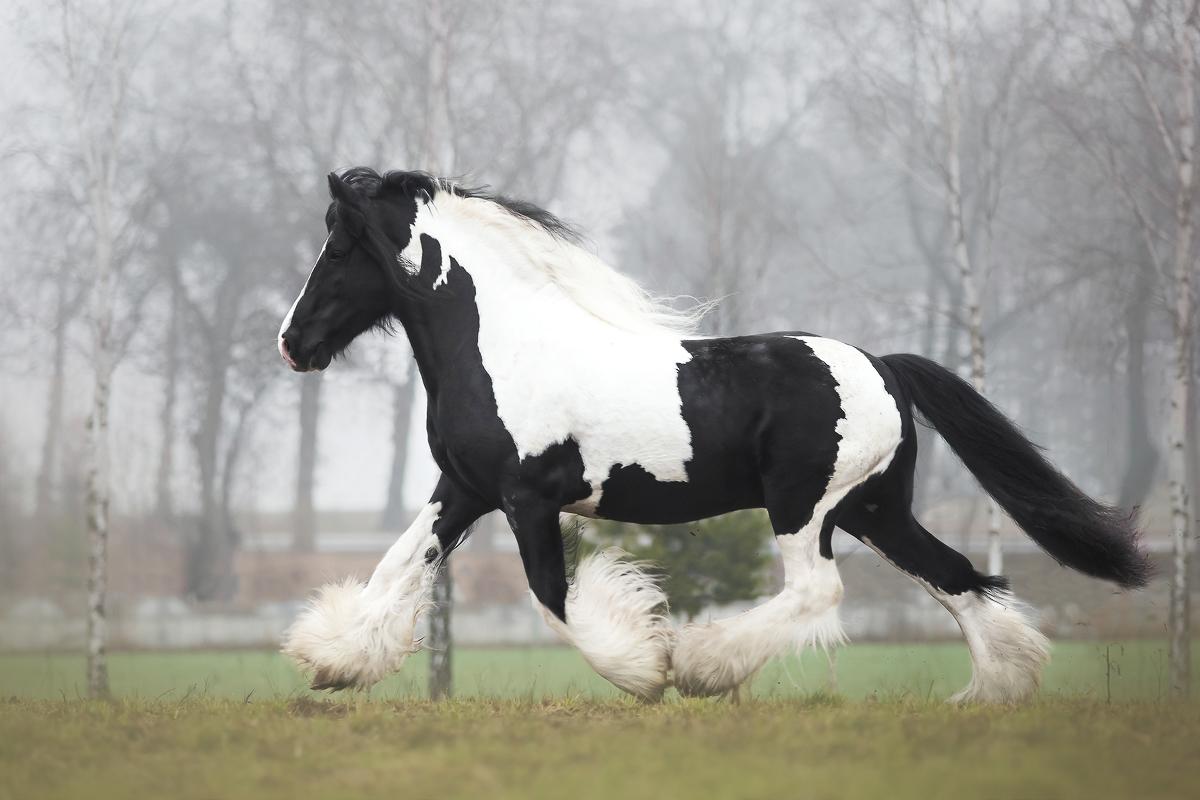 Fotografia koni – Fotograf Anna Sychowicz :: Baśniowe