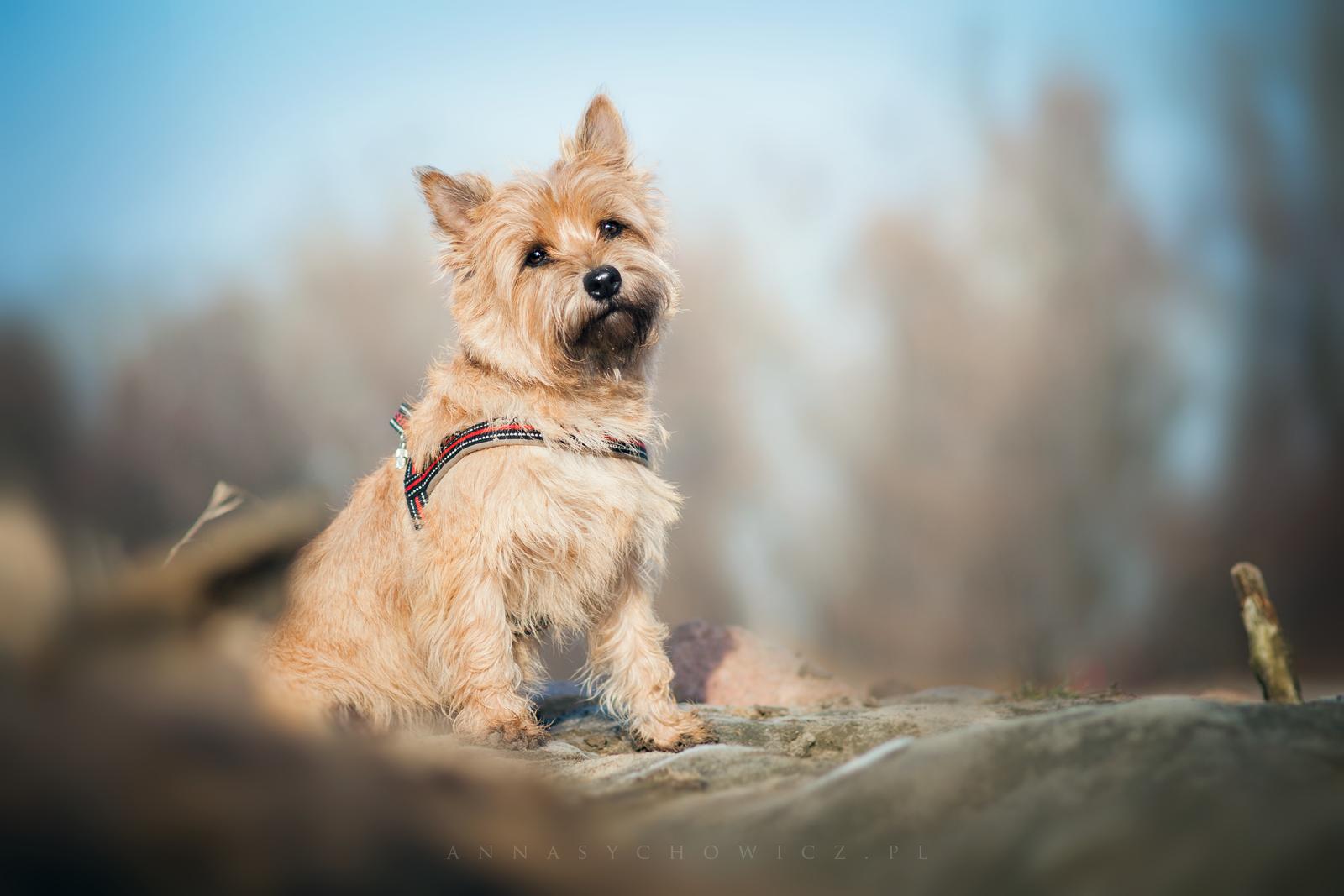 fotografia psów, zdjęcia psów, fotograf psów, zdjęcia zwierząt, foto-psy, fotopsy, foto psów, foto kotów, zdjęcia kotów, zdjęcia koni, foto konie, fotografia koni