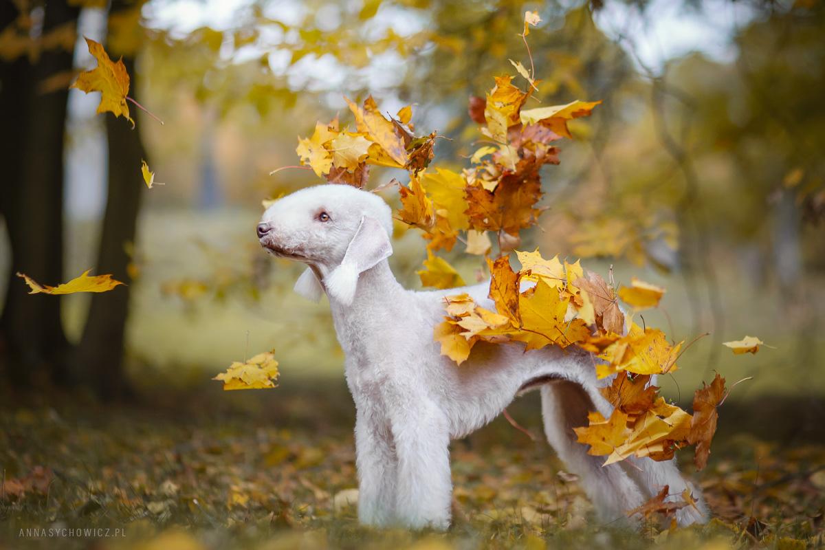 fotografia psów, fotograf psów